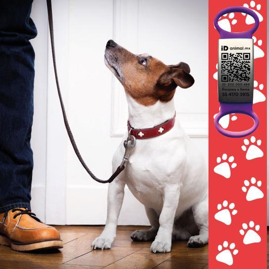 Pet Care Básico